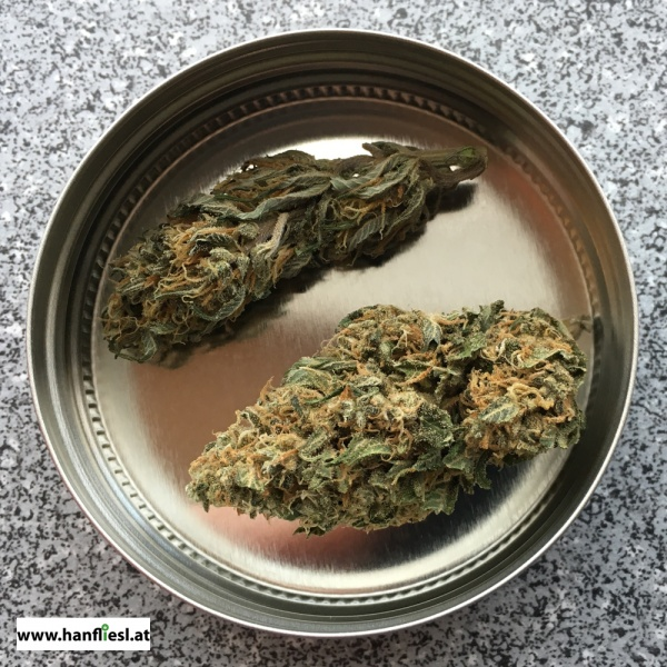 hanfliesl-hemp-plant-cbd-bud-bio-natural-online-shop-direct-sale-nursery-vienna-austria